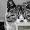 電力会社変更で電気代節約 1月分更新!前年比「8ヶ月で、約-2万2千641円!」「Looopでんき」