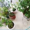 「騒音イラつきに」園芸とペットの癒しセラピー効果・・・。