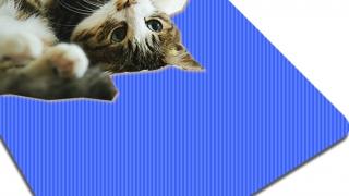 猫コラストレッチ 柔軟体操ネココラ