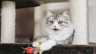 gamba cat collage