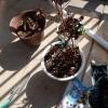 植木君達の様子・。と2月の電気代に母の体重更新と慢性腎臓病通知更新。と株投資3月。