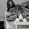 電力会社変更で電気代節約 12月分更新!前年比「7ヶ月で、約-1万6千645円!」「Looo
