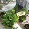 ベランダ園芸の収穫と小さな喜びの記録!