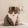 節約ついでに節水も試してみました。それは意外な結果でした・・・。