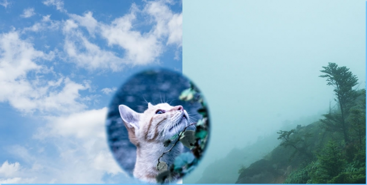 It can not be solved in the chemical Cat collage化学で解明できない運気の方角