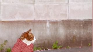 ネココラファッション 猫コラージュ