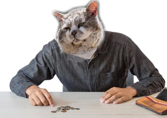 Cat collage of poor man